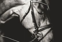Pretty As A Picture / Our favorite examples of horse photography.