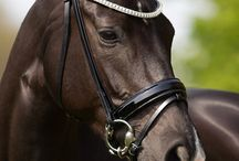 20 x 60 | Competition Bridles / We are the exclusive distributor for Premiera bridles in North America. Absolutely stunning handmade luxury snaffle bridles and double bridles.