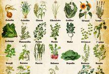 plantas, frutas, vegetales, nueces