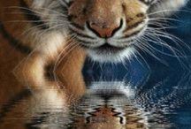 Favourite Animals / My favourite Animals