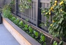 front fence/yard