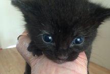 Black Cat Draak