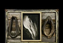 Equine Photography / All photos © 2015 Arrowood Photography. http://www.arrowoodphotography.com