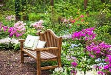 < Gardens & Gardening > / The garden is my place to  meditate, reflect and grow.  / by Toto