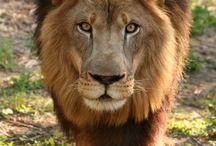 Leó Tamparol / Öreg de nem veszélytelen