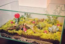Terrarium succulent hobby
