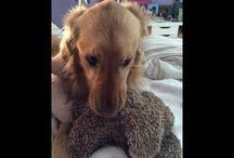 Sofie / Sofie is my best friends doggie