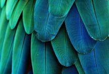 Blue Feathers / .