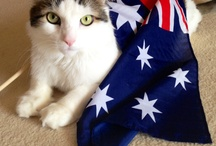 Australia Day Pets / What will your pets be doing this Australia Day long weekend?