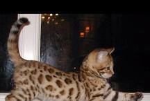 Leopard Lust  / by Colleen Corbett