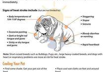 Animales - Serious / ... Woof! Meow! Baaa! Tweet tweet! Etc....