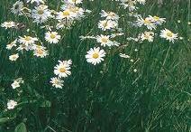 """Hillside""natural flower bank"