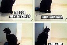 Funnies / by Dwayne Wallas