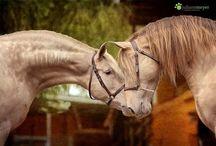 Champagne & pearl horses