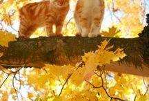 Kittens / Cats n stufh