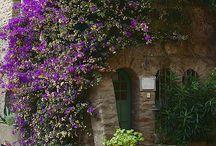 giardino e piante