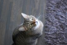 cats / by amanda