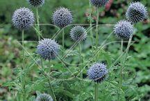 tuin: anti-slak planten