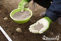 Удобрения для сада-огорода
