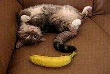 Banane bis