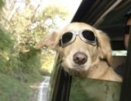 PetLvr.com - Pet Travel