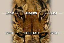 Endangered species/wildlife