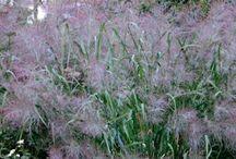 mijn grassen