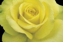 Flores <3