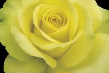 Urok kwiatu :..
