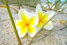 Bloemen (deco ideetjes)