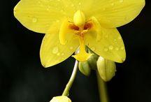 Çiçeğim Çİçeksin