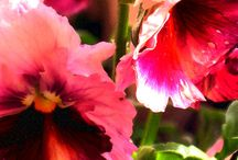 giardini e giardini / idee per il giardinaggio, suggestioni, immagini, poesie, dipinti, oggetti e persone che aiutano ad affinare i gusti verdi...
