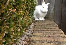 My bunny vlekje