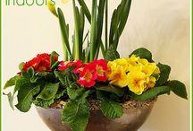 Holidays & Seasons: Spring