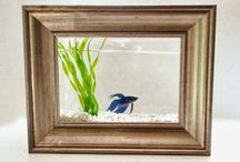 Fish tank in a picture frame.