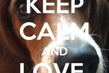 beagle cainii mei preferatiiiii