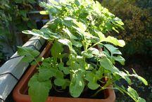 Herbs for your balcony garden / Kein Balkongarten ohne Kräuter! Hier stelle ich euch meine Lieblingskräuter vor.