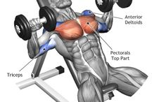 Pecks & Chest Exercises