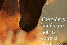 koně citáty