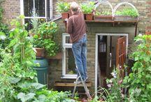 Outdoors - kitchen garden