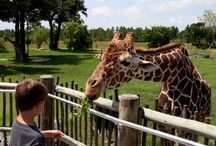 Eco Tours / Swimming, Eco, bird Watching, Animal Parks, Airboats
