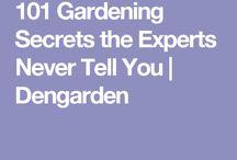 Secrets for a good veg garden