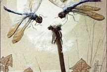 Dragonflys / by Krysta Robinson