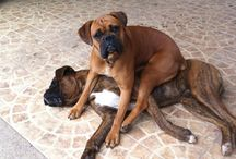 Boxers!  And Maybe Some Dogs / by Julie Seidel
