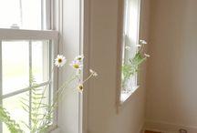 Home: windows and doors