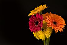 FLOWERS / by Mariana Miller