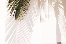 Palm Beach Pastel