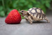 Cute and Adorable Animals / For Cute and Adorable Animals