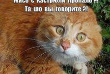 """""""Животный"""" Юмор"""