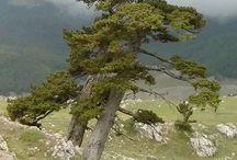Eleggi l'Albero dell'anno 2014. I venti alberi che partecipano alle Ten Challenge / Concorso Nazionale organizzato dall'Associazione Adea amici degli alberi di Roma nel gruppo Facebook Amici degli alberi con la supervisione tecnica di Antimo Palumbo.